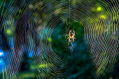 close up:spider on net in sunshine
