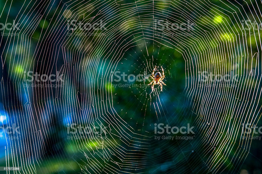 close up:spider on net in sunshine stock photo