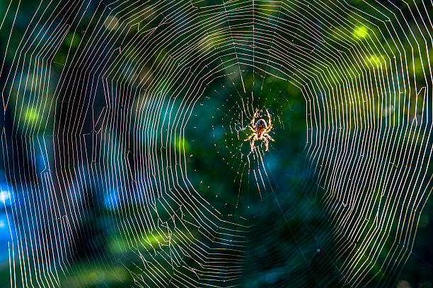close up:spider on net in sunshine - spider web stock photos and pictures