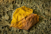 Fallen yellow leaf photographed over a stone background.
