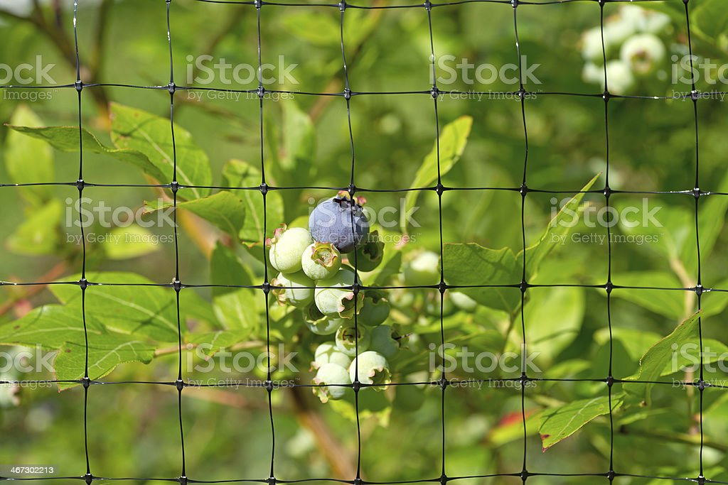Close view of protective bird netting stock photo