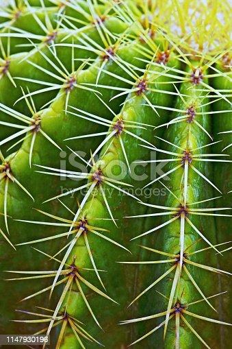 Closed up cactus.
