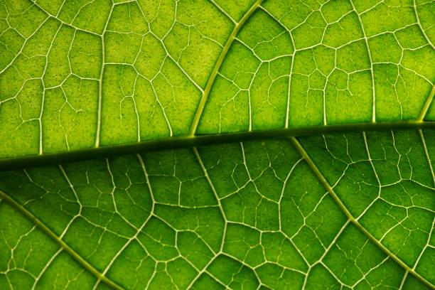 closed up green leaf details. - foliate pattern stock photos and pictures