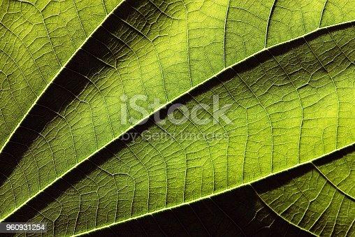 Closed up green leaf.