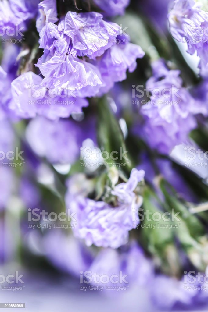 Closed up of purple statice flower background use for decoration closed up of purple statice flower background use for decoration royalty free stock photo mightylinksfo