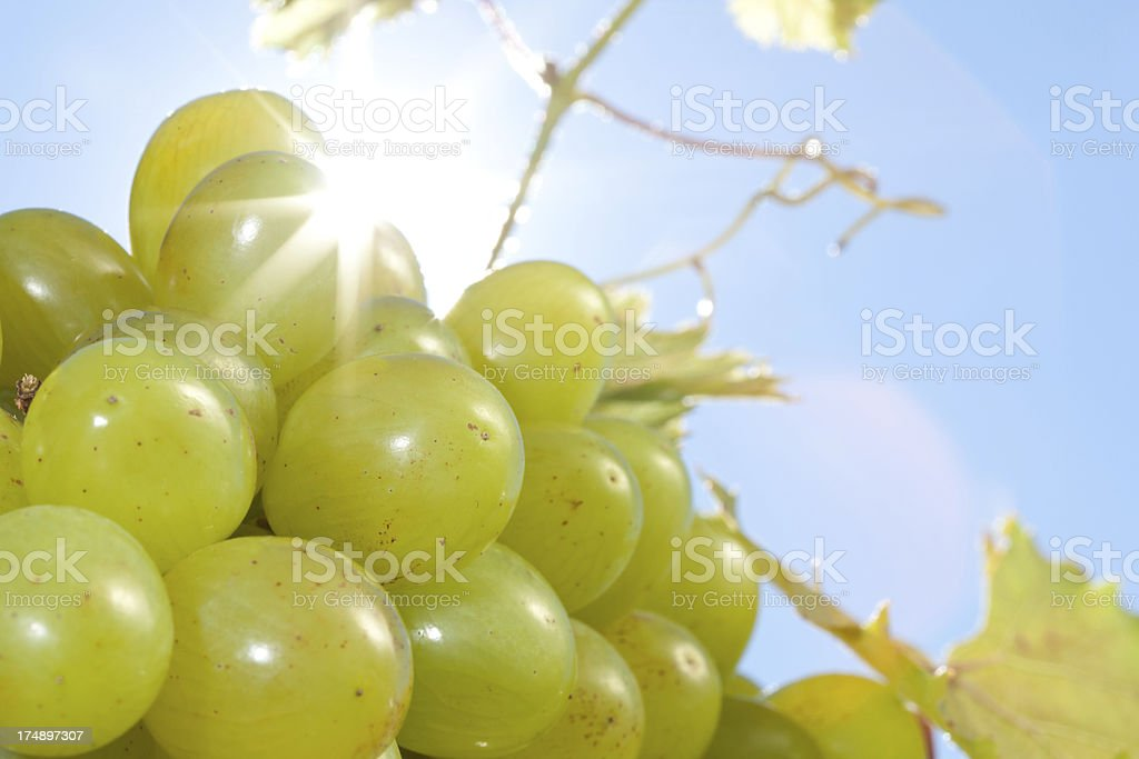 closer look on grapes royalty-free stock photo