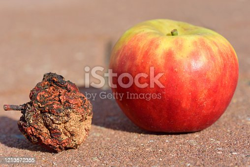 Close-up and comparison of two apples, one apple fresh and the other apple shriveled and old