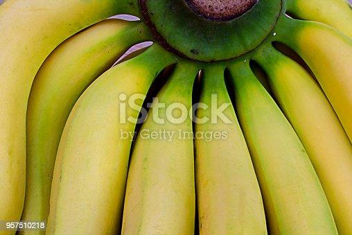istock Close-up at green bunch of fresh yellow bananas, tropical super fruits. 957510218