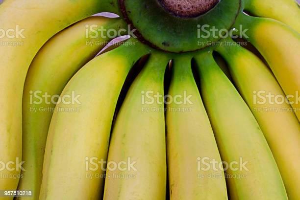 Closeup at green bunch of fresh yellow bananas tropical super fruits picture id957510218?b=1&k=6&m=957510218&s=612x612&h=a3qbsg5rwnsovq9tyo9 pxukybqehgdosvngjnswzt4=