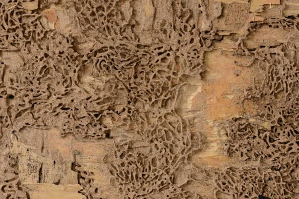close-upachtergrond en textuur van nesttermiet bij houten muur - termietenheuvel stockfoto's en -beelden