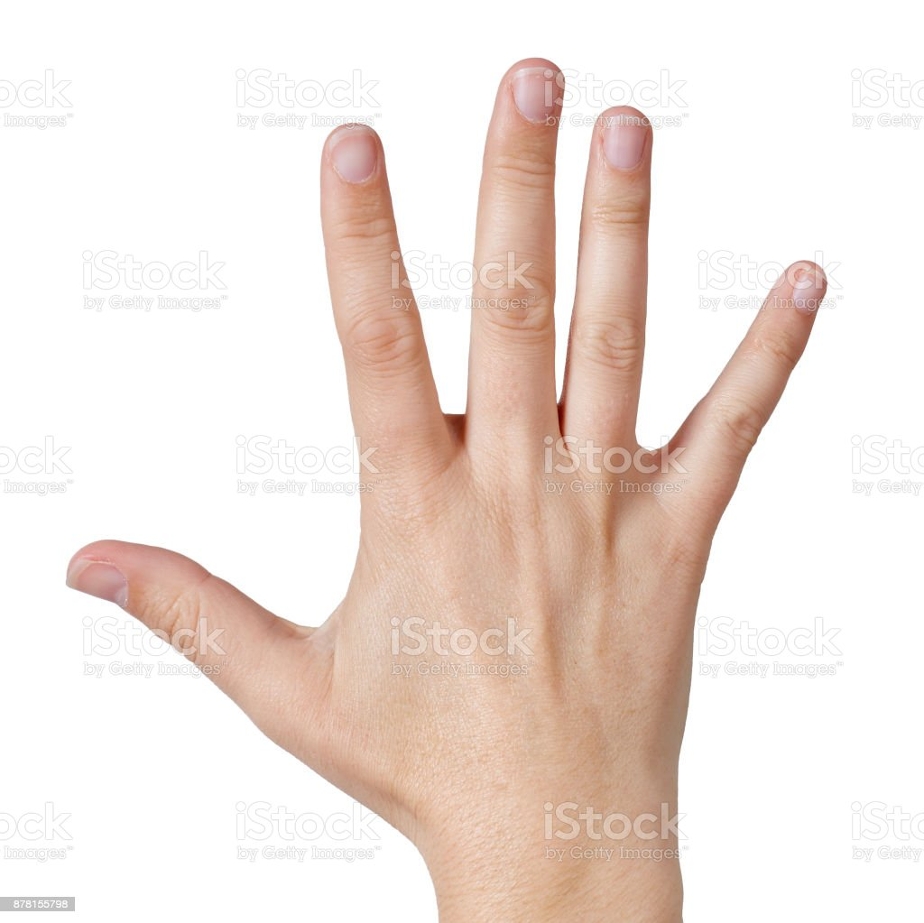 Close-up backview of  fingers and thumb on white, counting 'five' stock photo
