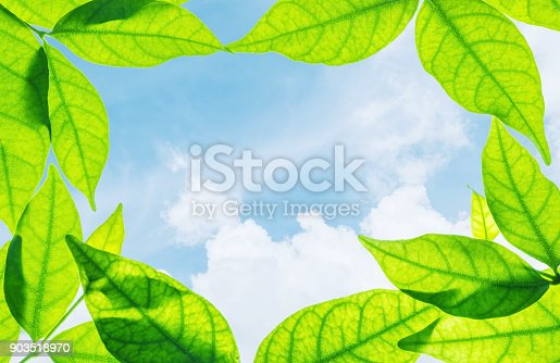 istock Closeup beautiful blue sky at the center of frame by green leaves isolated on white background 903518970