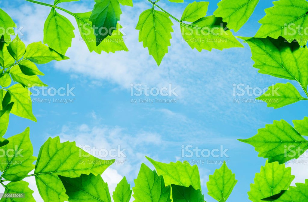 Closeup beautiful blue sky at the center of frame by green leaves...