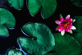 istock closeup beautiful lotus flower and green leaf in pond, purity nature background 1221742787