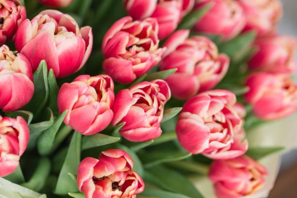 close-up. schöne luxus blumenstrauß rosa tulpen auf tabelle. die arbeit der floristen in einem blumenladen. - pfingstrosen pflege stock-fotos und bilder