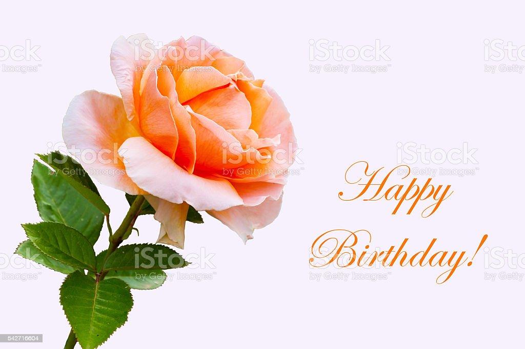Closeup Beautiful Rose Flower Happy Birthday Card 照片檔及更