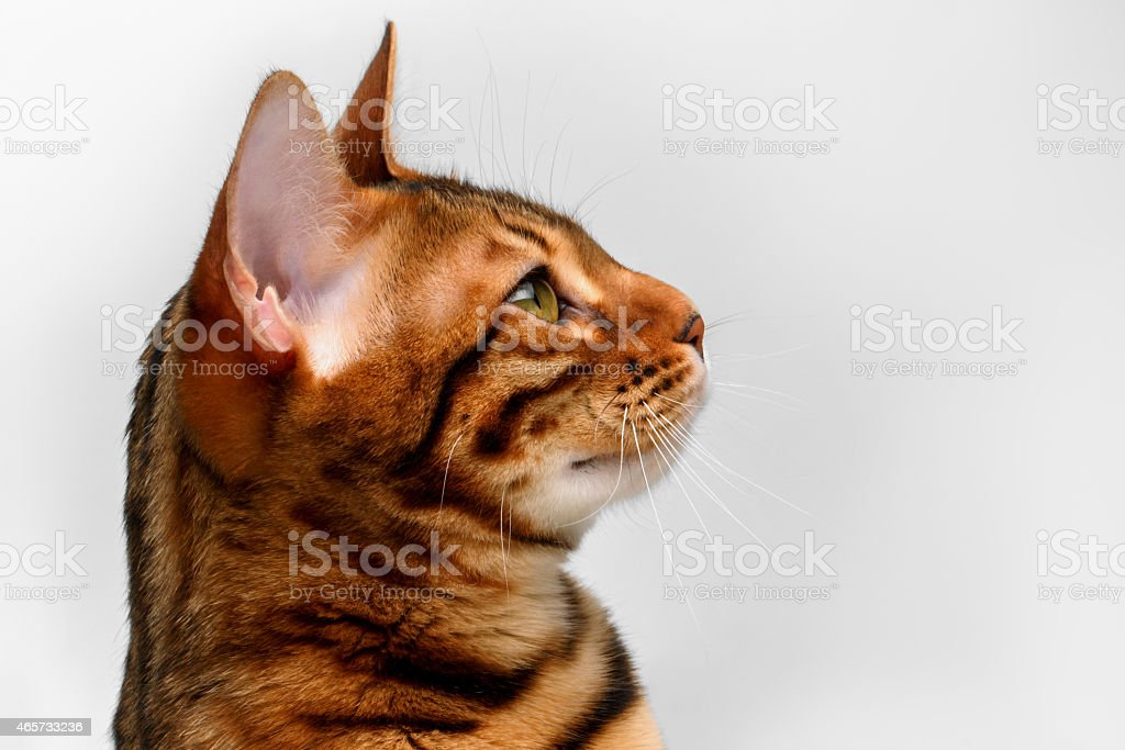 cat baby bjorn
