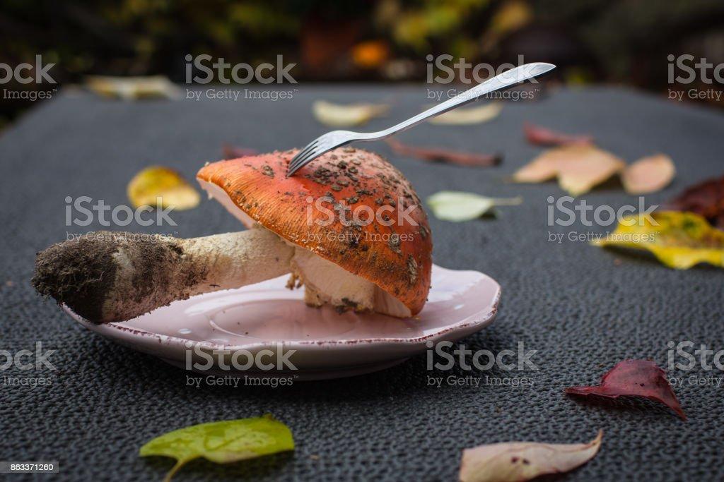 Closeup big mushroom-amanita with a fork stock photo