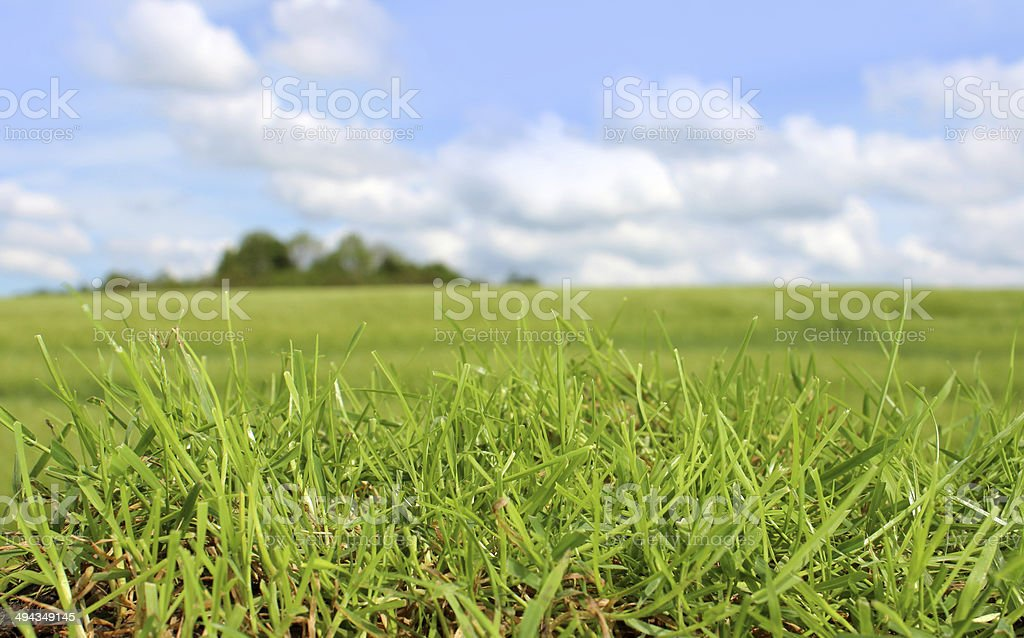 Close-up blades of grass, green field against cloudy blue sky stock photo