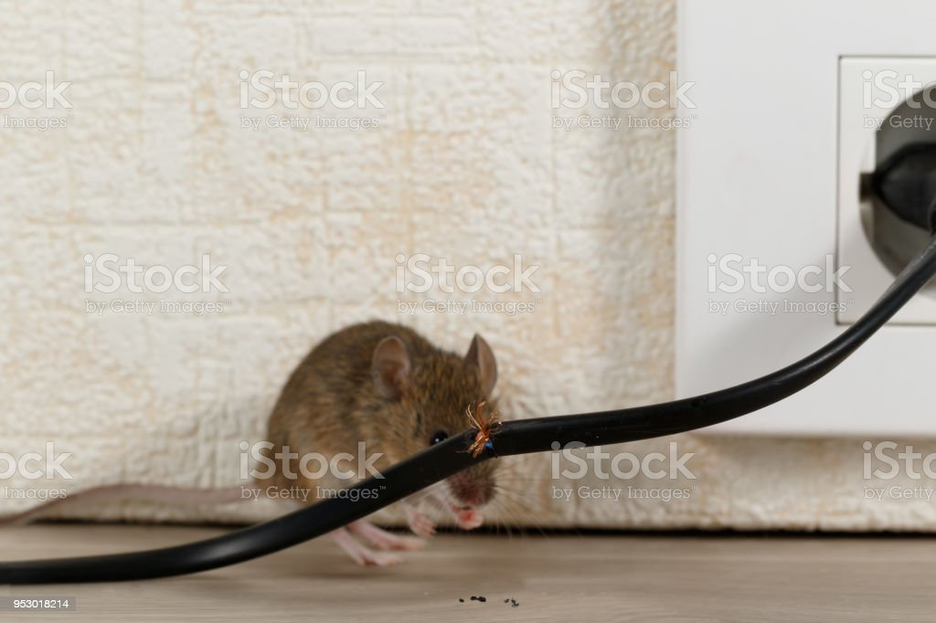 Closeup broken wire  on the background of mouse near wall inside high-rise buildings. stock photo