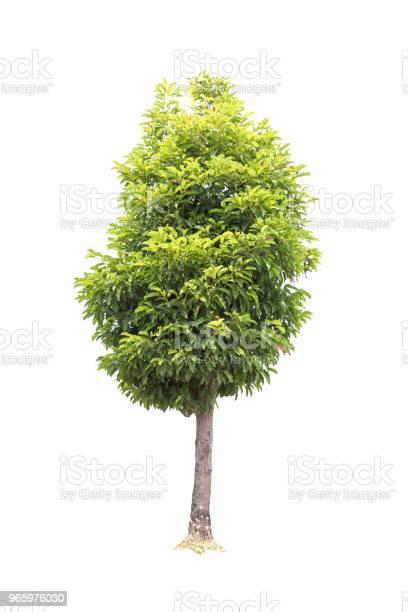 Närbild Bullet Trä Träd Isolerad På Vit Bakgrund-foton och fler bilder på Fotografi - Bild