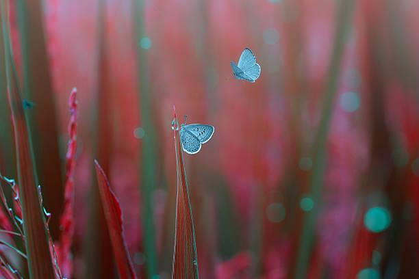 Closeup butterflies on the grass picture id534483542?b=1&k=6&m=534483542&s=612x612&w=0&h=pcmyfthynlkcbcob1u31qrugslo7t6gy4vu7jk 6xcy=