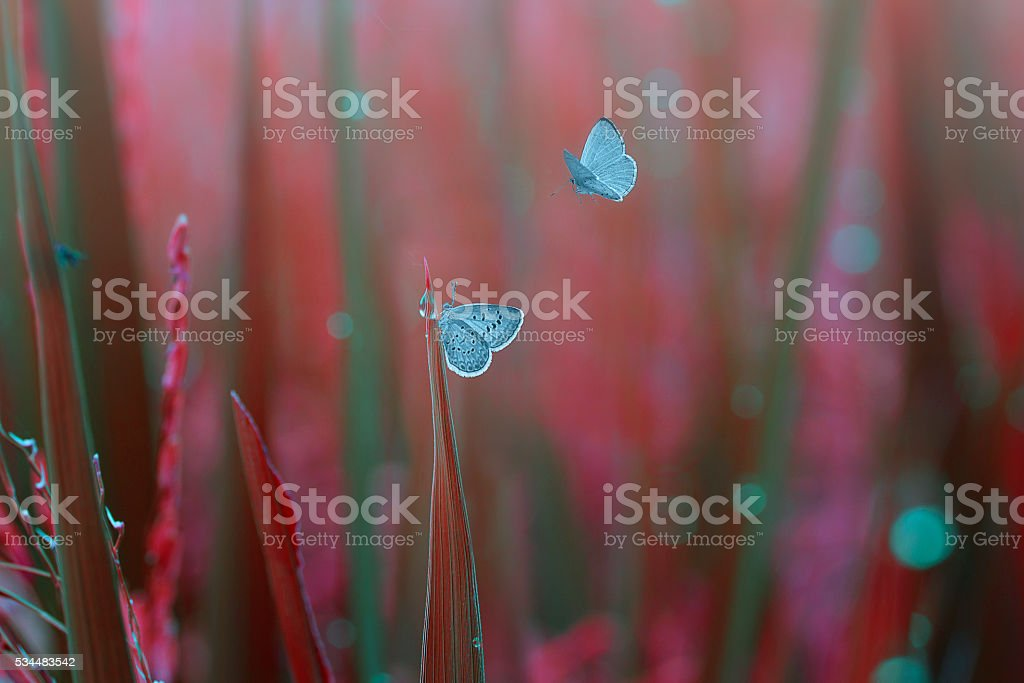 closeup butterflies on the grass stock photo