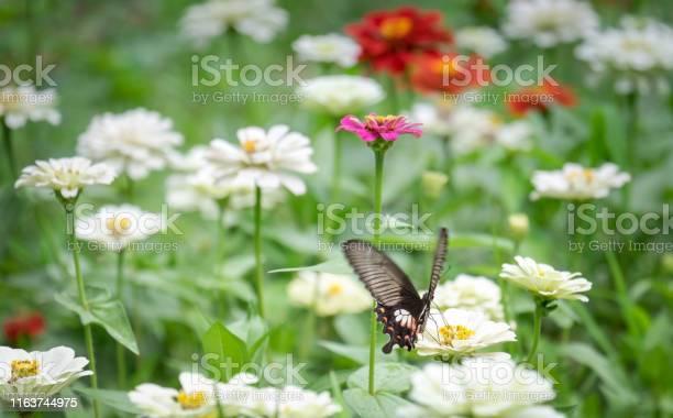 Closeup butterfly on flower picture id1163744975?b=1&k=6&m=1163744975&s=612x612&h=kjr mk jndsumaotf9xcalmtx6ktxclyxge8z3rxjn4=
