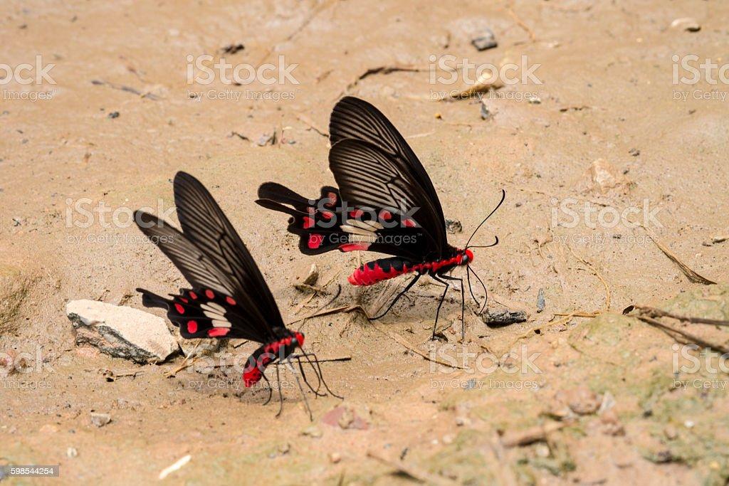 Papillon gros plan photo libre de droits