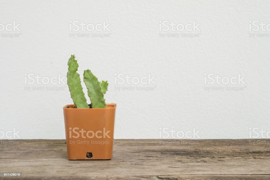 Closeup cactus in brown plastic pot on blurred wood desk and white cement wall textured background with copy space stock photo