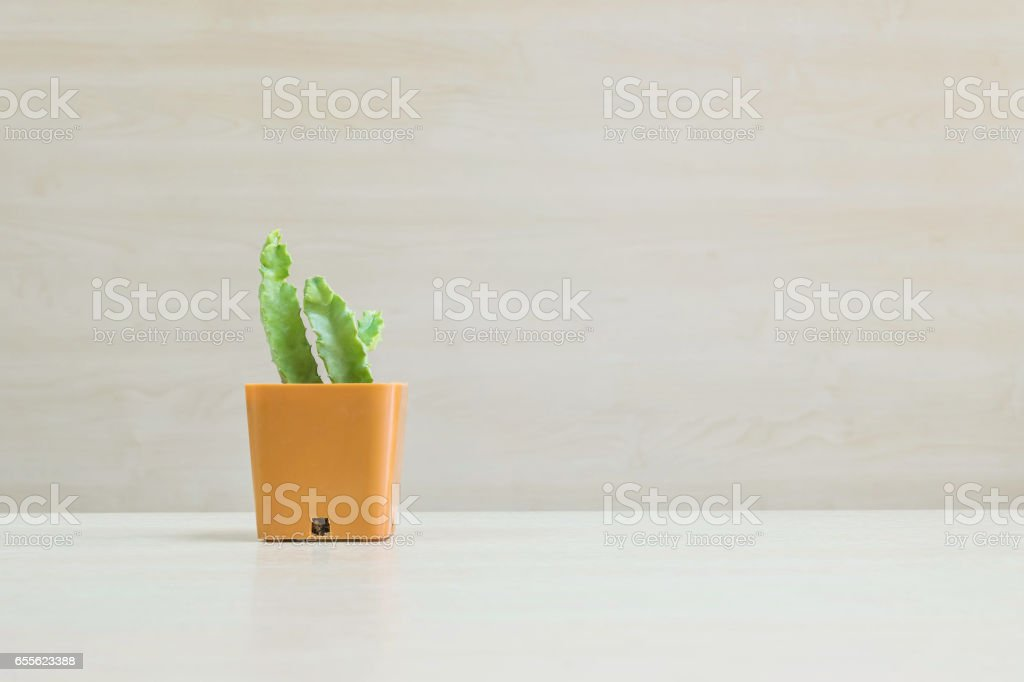 Closeup cactus in brown plastic pot on blurred wood desk and wood wall textured background with copy space stock photo
