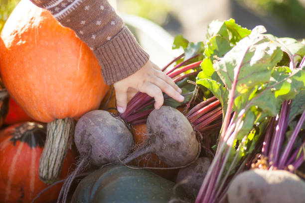 Closeup. child hand and harvested different vegetables, autumn day. stock photo