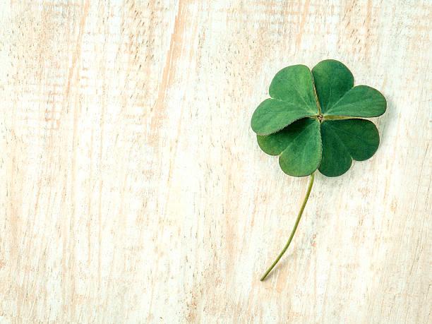 primer plano de la disposición clovers hojas sobre fondo de madera. - buena suerte fotografías e imágenes de stock