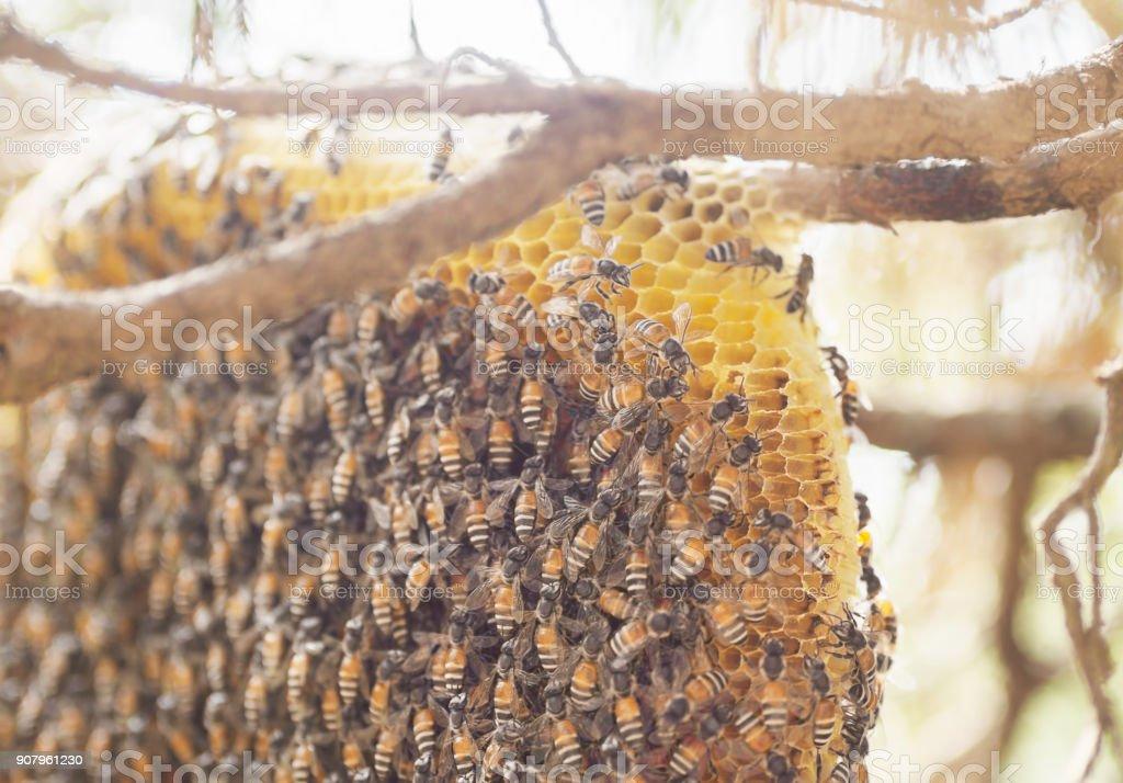 Close-up Ansammlung von Bienen auf Zypresse in Thailand – Foto