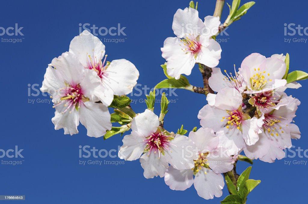 Primer plano de la flor de primavera colorida foto de stock libre de derechos