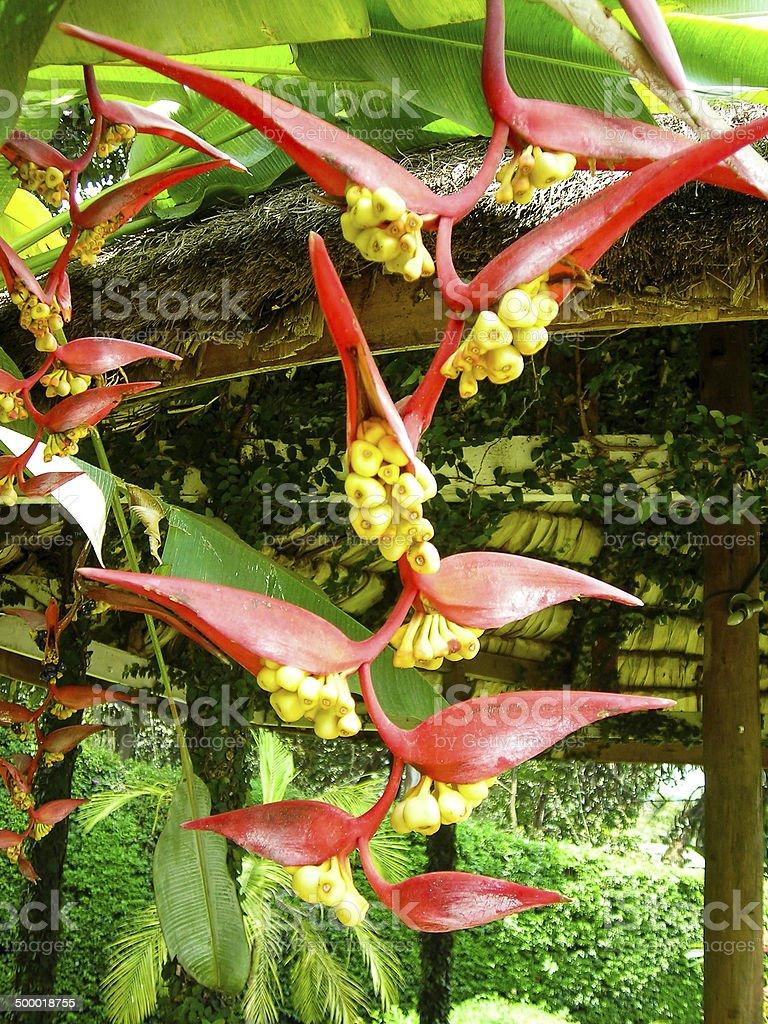 Closeup colorful tropical flowers by gazebo and gardens Gisenyi Rwanda stock photo