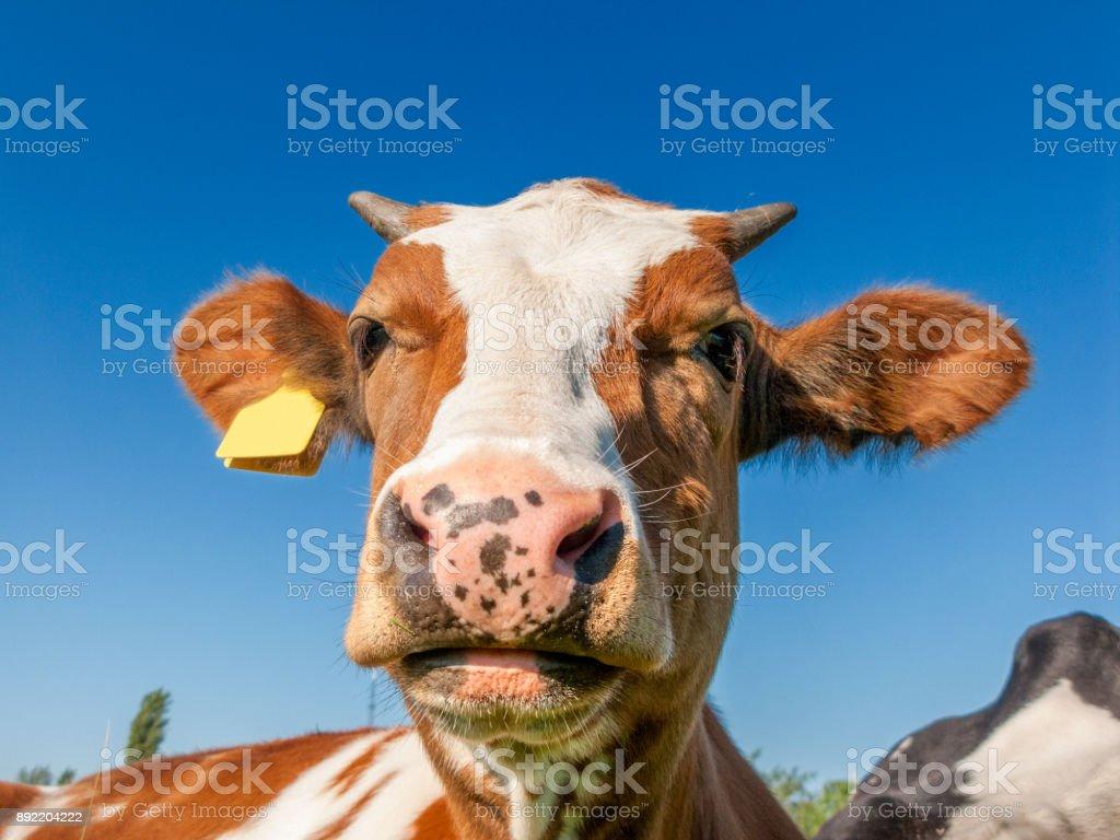 Fotografía de Cabeza De Vaca Primer Plano Contra Un Cielo Claro y ...