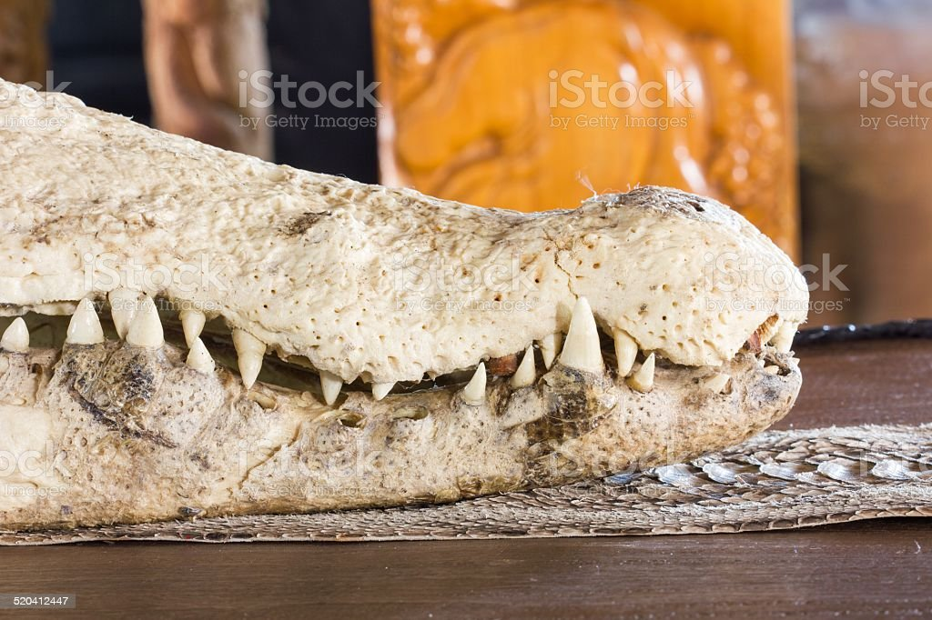 close-up crocodile skull stock photo