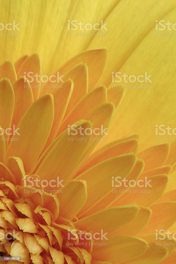Close-up Detail of Flower Petal Layers stock photo