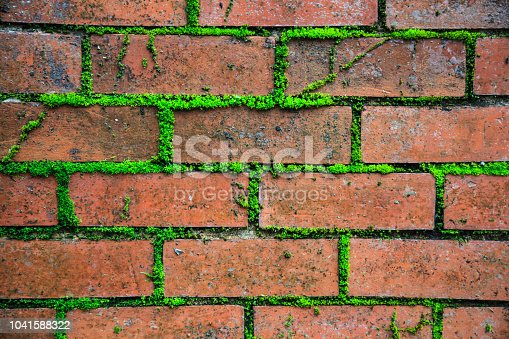 istock closeup detailed old aged textured vintage retro red brown brick block wall surface wallpaper backdrop with green life plant in concrete cement background. Interior exterior house home living design 1041588322