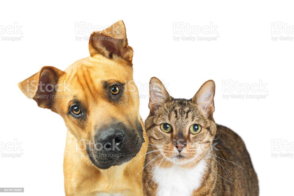 Closeup Dog and Cat Looking At Camera foto stock royalty-free