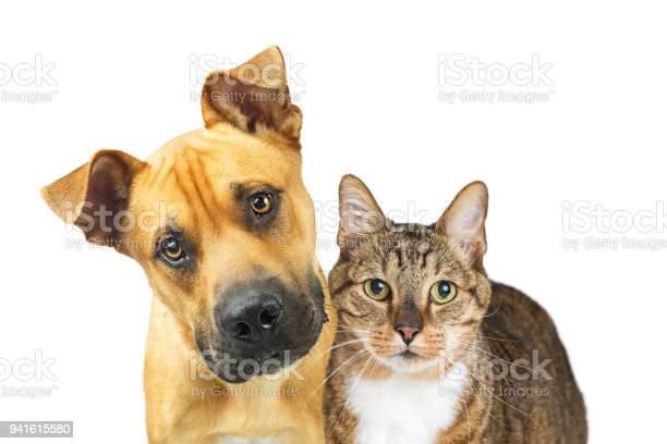 Closeup dog and cat looking at camera picture id941615580?b=1&k=6&m=941615580&s=612x612&h=dx mmo64j 0fbausyznqtu9uc9fhrgbkvrrudufm0ei=