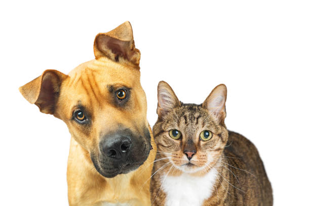 Closeup dog and cat looking at camera picture id941615580?b=1&k=6&m=941615580&s=612x612&w=0&h=v6rioe0cfsw8ze74qis6y90n2xbndksgzpbvy4 0ufi=