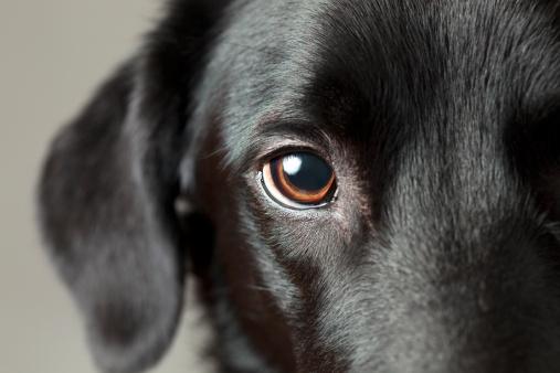 Close-up dog eye looking at you