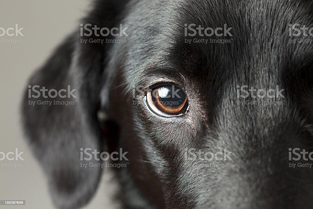 Nahaufnahme der Hund Auge sehen Sie – Foto
