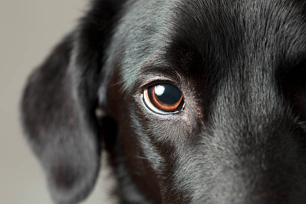 Close-up dog eye looking at you stock photo