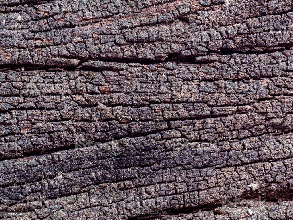 Closeup getrocknet Textur der dunkle braune Rinde. – Foto