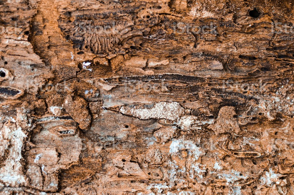 Close-up dtreailed view of the damaged tree bark texture stock photo