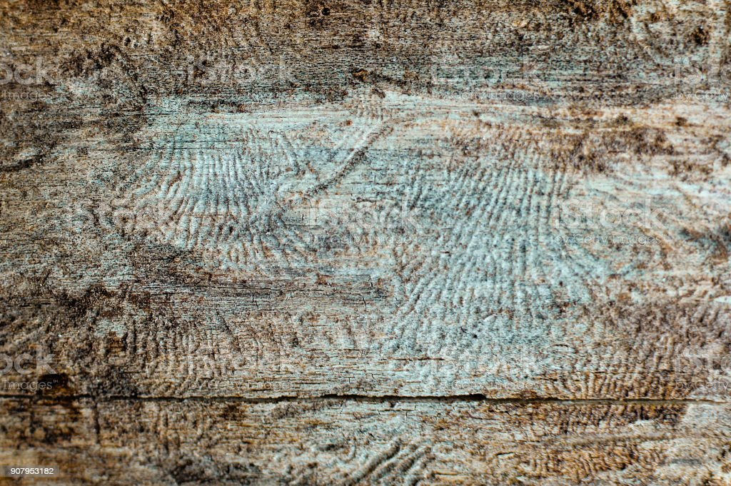 Close-up dtreailed view of the damaged tree barque texture stock photo