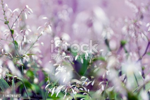 Closeup field of white flowers, beautiful nature background with copy space, full frame horizontal composition